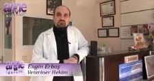 Anne TV - YAVRU KÖPEKLERDE ÖDÜLLENDİRME, CEZALANDIRMA