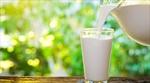 İnek sütü inekler içindir